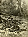 Hunting and trapping stories; a book for boys (1903) (14595832139).jpg