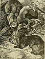 Hunting and trapping stories; a book for boys (1903) (14782158002).jpg