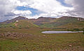 Independence Pass alpine tundra.jpg