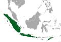 Indonesian Short-nosed Fruit Bat area.png