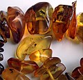 Insects in amber necklace.jpg