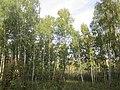 Iskitimsky District, Novosibirsk Oblast, Russia - panoramio (11).jpg