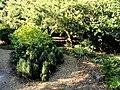J. C. Raulston Arboretum - DSC06242.JPG