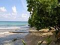 Jamaica - panoramio (20).jpg
