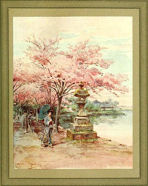cherry blossoms - image 10