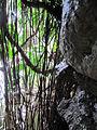 Jardim Botanico Tropical (14005280802).jpg