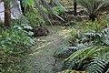 Jardin Feteira Rainha Sintra 13.jpg