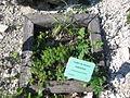 Jardin botanique Dijon 046.jpg