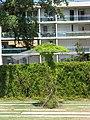 Jardin botanique de Bordeaux 2.jpg