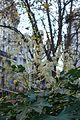 Jardin d'Alleray @ Paris (31303548825).jpg