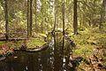 Jyväskylä Ankeriasjärvi - stream 2.jpg