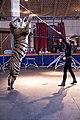 Königstiger Korfu mit Trainerin Monica Farell.jpg