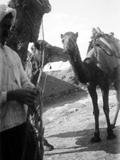 Kameler lastas med keramiklådor. Milia - SMVK - C00757.tif