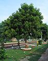 Kausi Kala Railway Station Mathura, Delhi (3).JPG