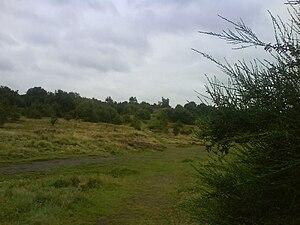 Kersal Moor - Kersal Moor, August 2007