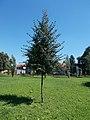 Kherson twin town memorial tree, Vizslapark, 2020 Zalaegerszeg.jpg