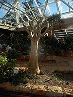 Kirstenbosch National Botanical Garden by ArmAg (40).jpg