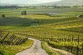 Klein-Winternheim - im rheinhessischen Weinanbaugebiet.jpg
