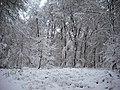 Kleve reichswald.jpg