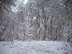 Klever Reichswald - The Reichswald in the winter near Kleve.