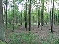Kosy, Szlak Kaszubski (Trail Kashubian) - panoramio (3).jpg