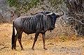 Krugerův park, Jihoafrická republika - panoramio (1).jpg