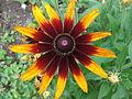 Kwiatek 52.jpg