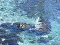 L'Acqua cristallina di San Gregorio - panoramio.jpg