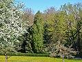 Löwenzahn-Blütenwiese bei Ehningen - panoramio.jpg