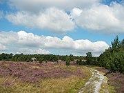 Die Lüneburger Heide bei Niederhaverbeck