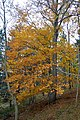 LSG Sudmerberg - Bäume (6).jpg