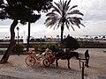 La Seu, 07001 Palma, Illes Balears, Spain - panoramio (23).jpg