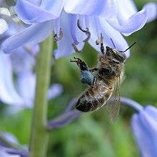 Reproduction Chez Les Plantes A Fleurs Wikipedia