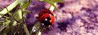 Lady butterfly by Rosier.jpg