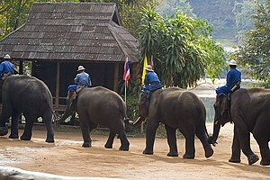 Lampang - elephant train in  Thai Elephant Conservation Center,Hang chat district Lampang, Thailand