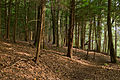 Laurel Hill State Park Trees.jpg