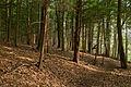Laurel Hill State Park Trees.jpg