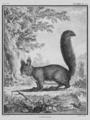 Le Ecureuil - Squirrel - Gallica - ark 12148-btv1b2300254t-f34.png