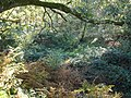 Leafy Hollow in Castle Hill Wood - geograph.org.uk - 272527.jpg