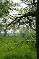 Leiemeersen , typisch rivierlandschap te Sint-Martens-Latem - 372545 - onroerenderfgoed.jpg
