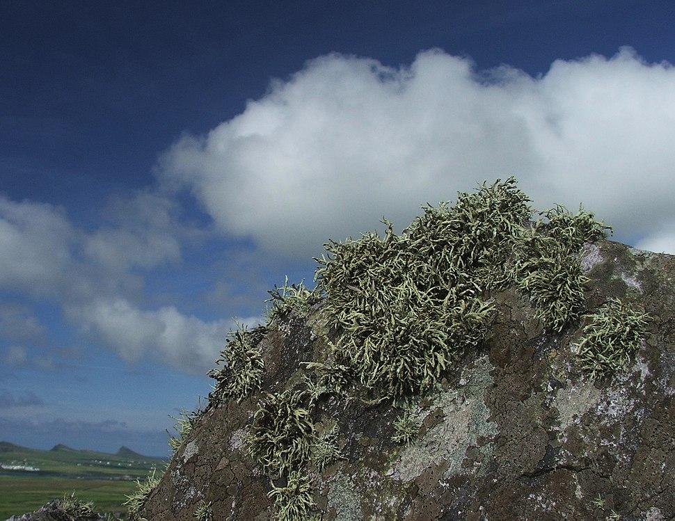 Lichens near Clogher Head (stevefe)
