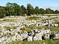 Limestone Pavement on Knipe Moor - geograph.org.uk - 549717.jpg