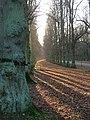 Limetree Avenue, Clumber Park - geograph.org.uk - 93052.jpg