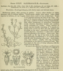 First page of Lindley's Saxifragales from 1853