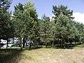 Lipowy Ostrów - wyspa na j. Jeziorak - panoramio.jpg