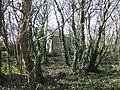Little Pednavounder - geograph.org.uk - 411685.jpg