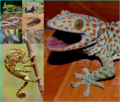 Lizard Collage.png