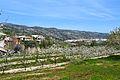 Llombai, Alpatró i cirerers, la vall de Gallinera.JPG