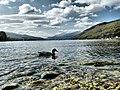 Loch Tay from Kenmore beach - geograph.org.uk - 1421879.jpg