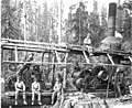 Logging crew and donkey engine, English Lumber Company camp no 5, ca 1917 (KINSEY 151).jpeg